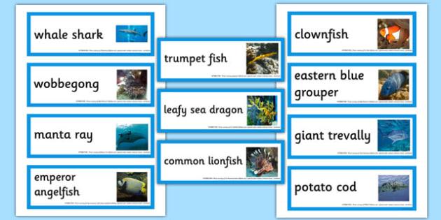 Australian Fish Word Cards - australia, animals, fish, word cards