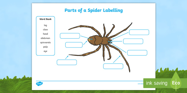 parts of a spider labelling worksheets insect body. Black Bedroom Furniture Sets. Home Design Ideas