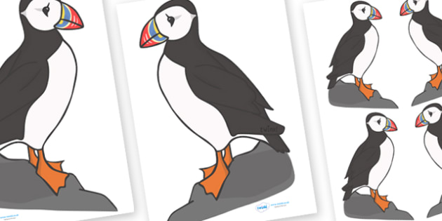 Editable Puffin (A4) - Puffin, editable, A4, animal, animals, tropical, rainforest, bird, birds
