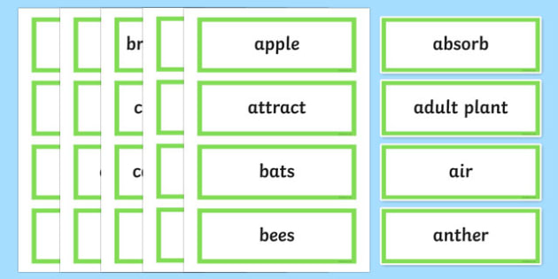Plants In Action Word Wall Display Cards - australia, Australian Curriculum, Plants in Action science, Year 4, word wall, display