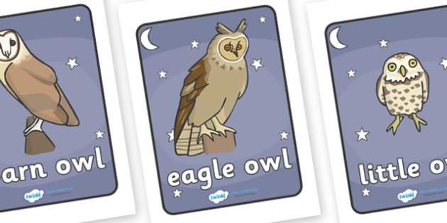 Types Of Owl Display Posters - owls, types of owls, display, poster, banner, sign, night, nocturnal animal, bird, barn owl, eagle owl