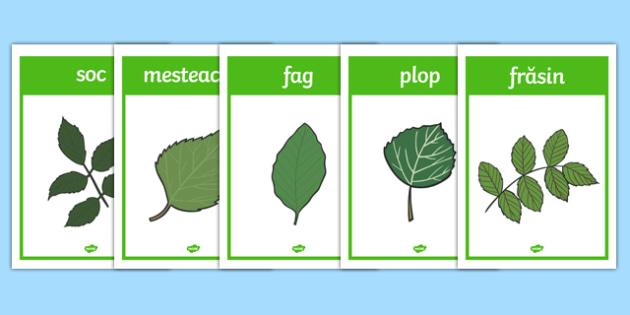 Frunzele copacilor - Planșe