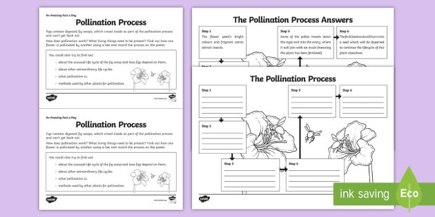 pollination process worksheet activity sheet challenge. Black Bedroom Furniture Sets. Home Design Ideas