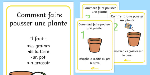 Comment faire pousser une plante - french, Plant, Growth, Topic, Foundation stage, Flower, knowledge and understanding of the world, investigation, living things, labelling, labelling plant