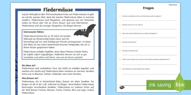 Fledermäuse Leseverstehen Arbeitsblätter - Lesen, Üben