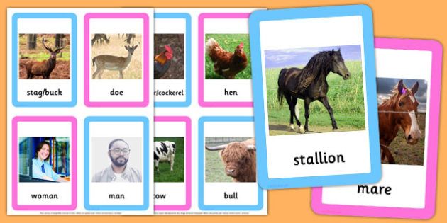 Male and Female Animal Names Matching Cards - male, female, animal, names, matching, cards