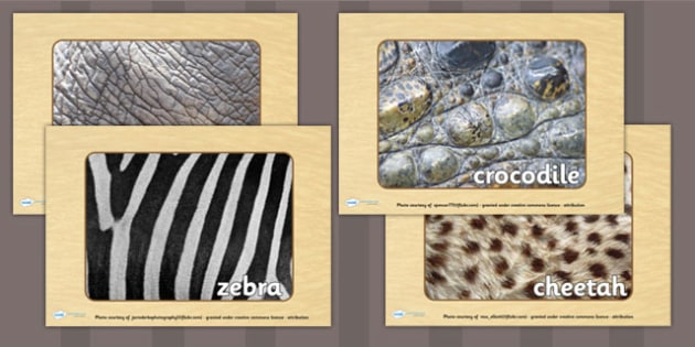 Safari Pattern Display Photos - jungle, animals, safari display