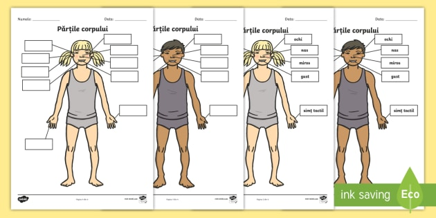 Imagini cu corpul uman in engleza