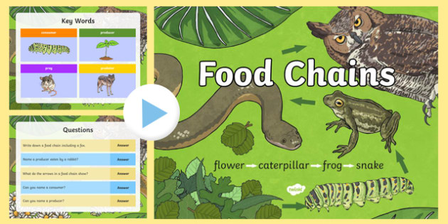 Food Chain PowerPoint - Science Resource - Twinkl