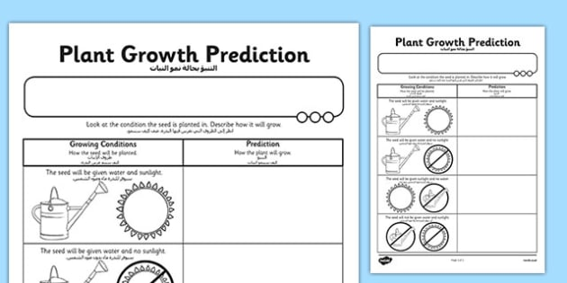 Plant Growth Prediction Worksheet Arabic Translation Arabic