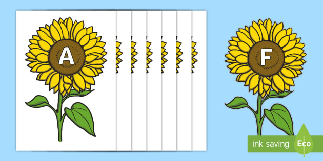 A-Z Alphabet on Sunflowers (teacher made)