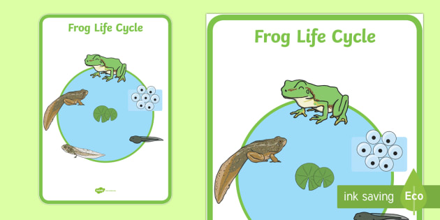 how to make model of life cycle of frog