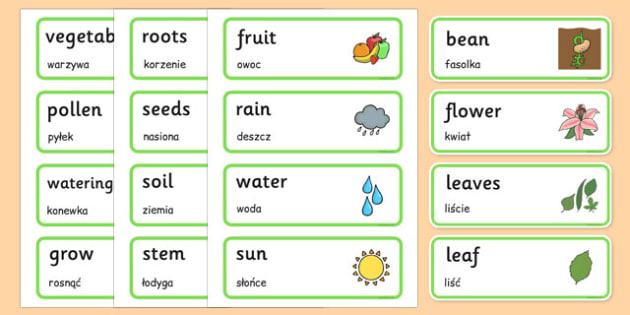 Growth Topic Word Cards Polish Translation - polish, Plant, Growth, Word Card, Topic, Foundation stage, knowledge and understanding of the world, investigation, living things