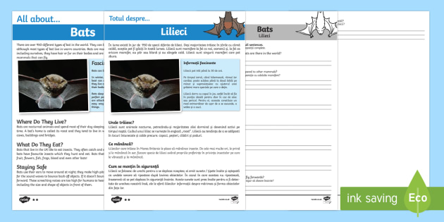 Bats Reading Comprehension Pack English/Romanian