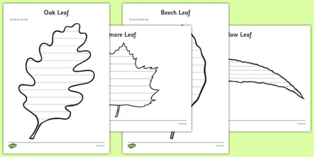 Leaf Themed Review Activity Sheet Pack - leaf, themed, review, activity, sheets, worksheet