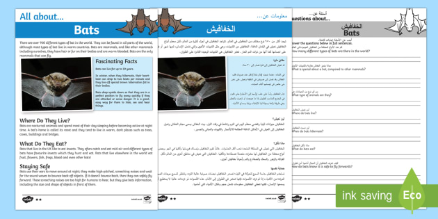 Bats Reading Comprehension Pack Arabic/English - Bats Reading Comprehension - bats, reading, comprehension, read, comprehesion, comprehnsion, reading