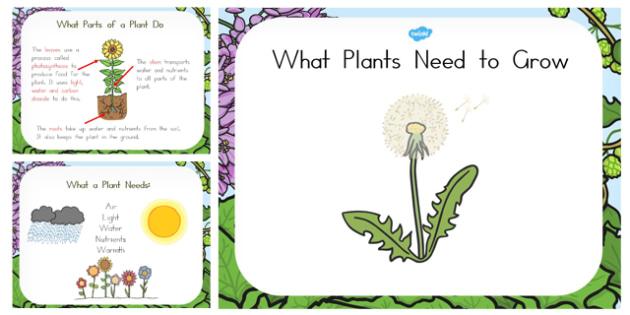 What Plants Need to Grow PowerPoint - australia, plant, grow, need