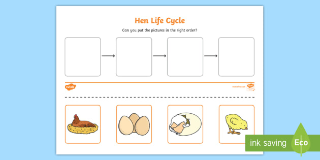 Hen Life Cycle Worksheets - australia, hen, life cycle, sheet