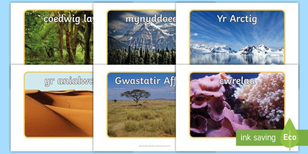 Ffotograffau Cynefinoedd Anifeiliaid - anifeiliaid, cartrefi, cynefin, cynefinoedd, ,Welsh