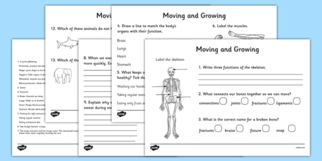 Moving and Growing Worksheet - the human body, growth and change, growing worksheets, movement worksheets, muscle, organs, our bodies, ks2 science, biology