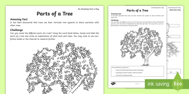 Parts Of A Tree Worksheet Activity Sheet Tree Parts Tree