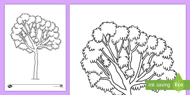 Ghaf Tree Colouring Page Teacher Made