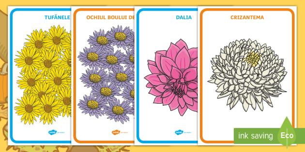 Flori De Toamnă Planșă Toamna Flori De Toamnă Crizanteme