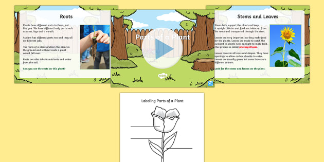 Parts of a plant task setter activity powerpoint with worksheet ccuart Images