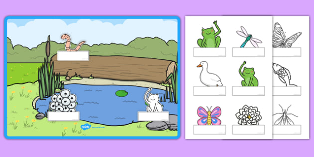Pond Themed Self-Registration Chart and Labels - EYFS, Early Years, daily routine, register, PSED
