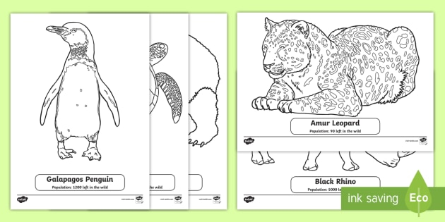 t sc 120 endangered animals colouring sheets ver 1