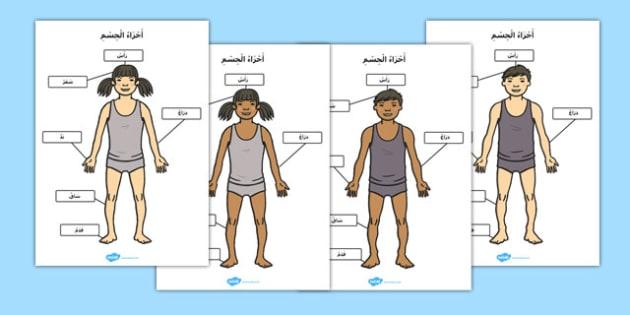 أجزاء الجسم كتابة مع الحركات - أجزاء الجسم، موارد تعليمية، وسائل