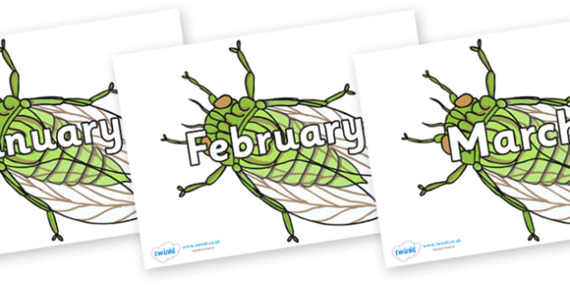 Months of the Year on Cicada - Months of the Year, Months poster, Months display, display, poster, frieze, Months, month, January, February, March, April, May, June, July, August, September