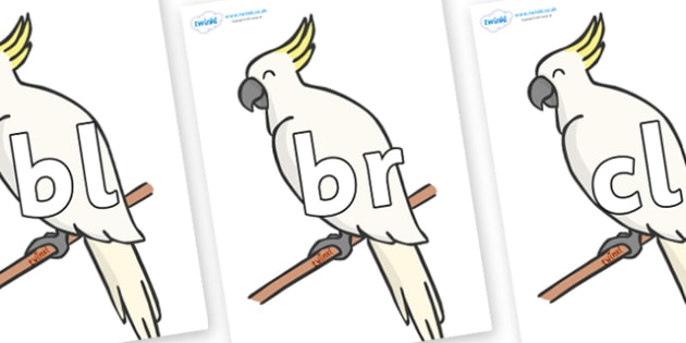 Initial Letter Blends on Cockatoos - Initial Letters, initial letter, letter blend, letter blends, consonant, consonants, digraph, trigraph, literacy, alphabet, letters, foundation stage literacy