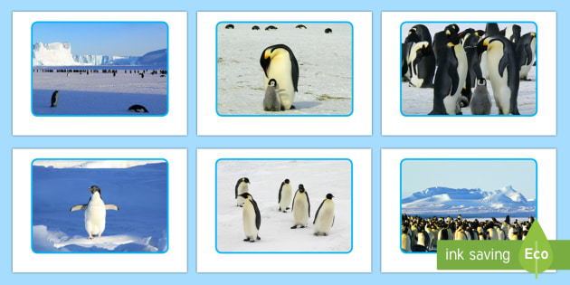 Penguin Display Photos - The Arctic, Polar Regions, north pole, south pole, explorers, winter, penguins, antarctic
