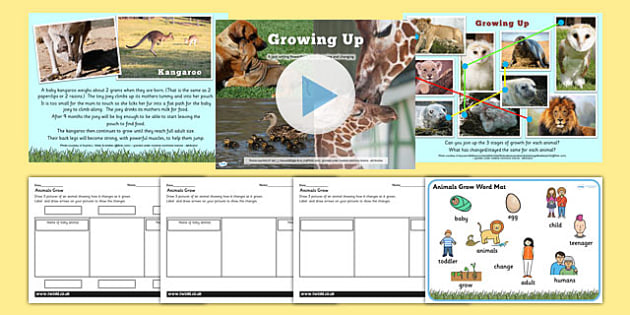 Animals Including Humans Grow PowerPoint Teaching Pack - animal