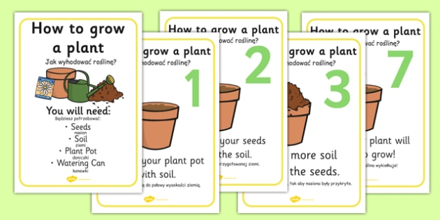 How to Grow a Plant Posters Polish Translation - polish, Plant, Growth, Topic, Foundation stage, Flower, knowledge and understanding of the world, investigation, living things, labelling, labelling plant
