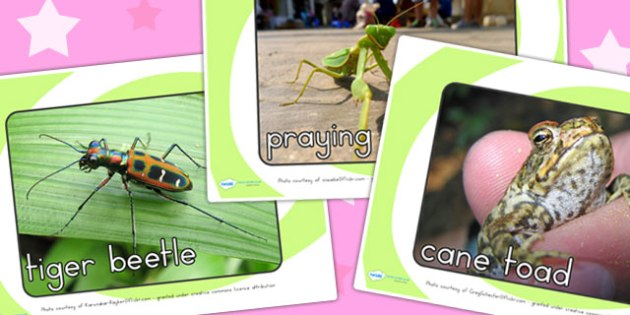 Minibeasts Display Photos - minibeasts display, display images