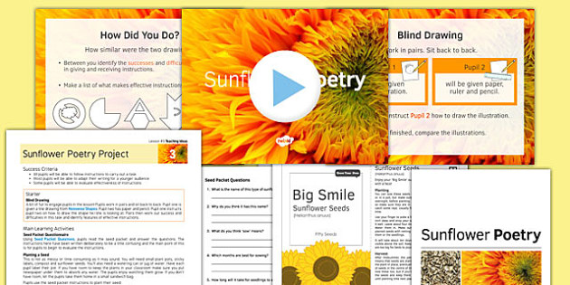 Sunflower Poetry Project Teaching Pack Lesson 3 - poetry, lesson