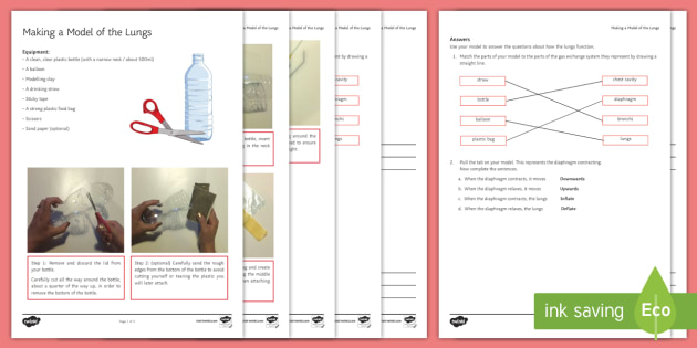 Modelling Lung Action Investigation Instruction Sheet Print-Out - Investigation Help Sheet, science practical, method, instructions, model, lungs, respiration, breath