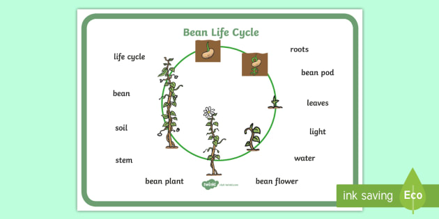 Bean Growth Word Mat - Bean, plants, word mat, plant lifecycle, Topic, Foundation stage, knowledge and understanding of the world, living things, plant growth