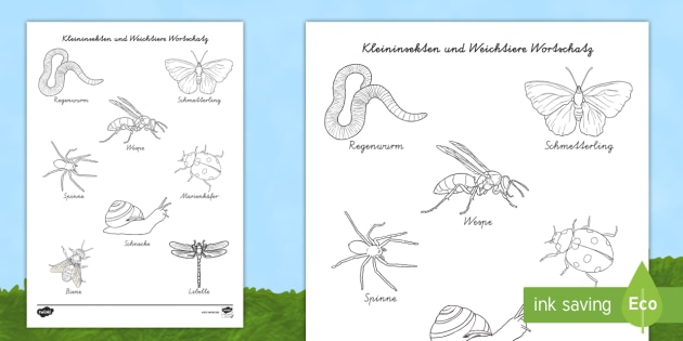 NEW * Kleininsekten und Weichtiere Wortschatz zum Anmalen