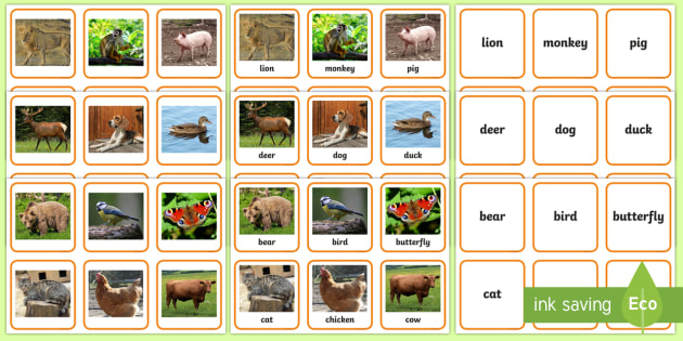 Animals Photo Matching Cards - animals sorting cards, animals, activities, memory, animal photos, bear, bird, butterfly cat, chicke