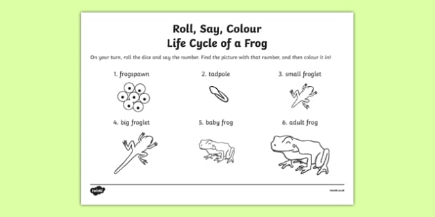 Life Cycle Of A Frog Roll Say Colour - frog, life cycle, colours