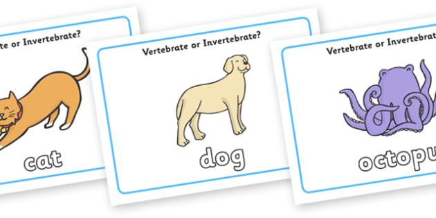 Vertebrate Or Invertebrate Display Posters - vertebrate, invertebrate, display, poster, sign, activity, vertebrate or invertebrate, game, matching, animals, animal, types, different