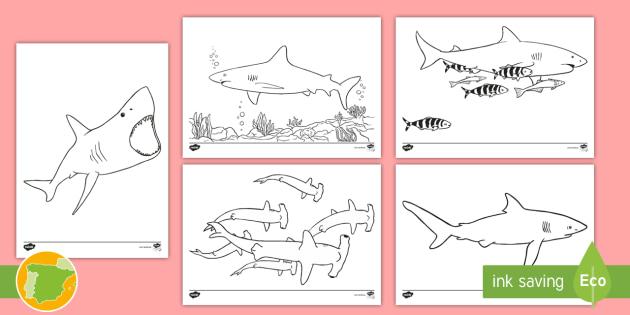 NEW * Hoja de colorear: Los tiburones - pintar, colorear