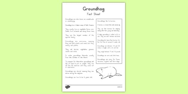 Groundhog Fact Sheet - groundhog day worksheet, groundhog, tradition, celebration, fact sheet