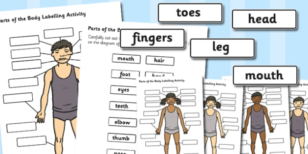 Body Parts Labelling Activity - body parts, labelling, activity, label