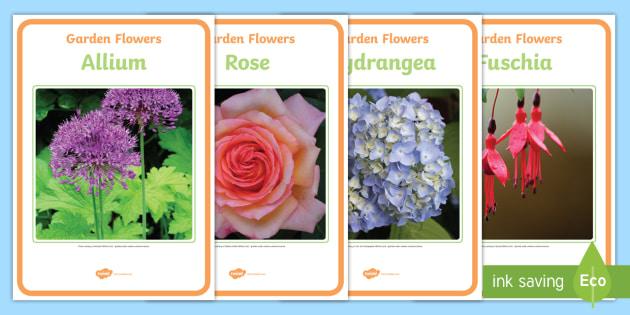 Garden Flower Photo Display Posters - flowers, flowers posters, flowers photo posters, flower photo posters, flower display posters, flower photos, flower