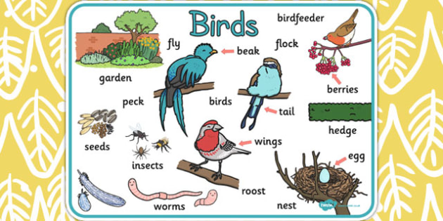 Bird Word Mat - bird, word mat, word, mat, birds, words, display