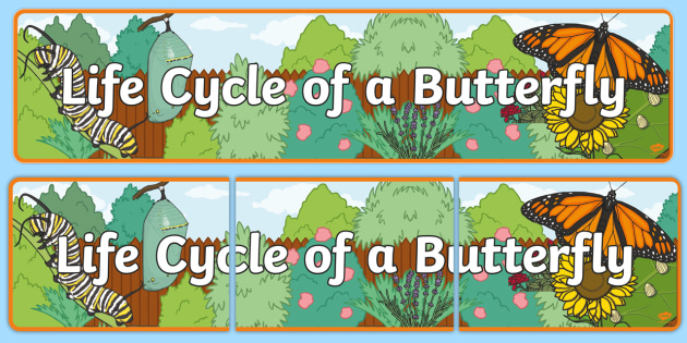 Life Cycle of a Butterfly Display Banner - Butterfuly, life